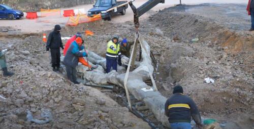 Εντυπωσιακό απολιθωμένο δένδρο με τα κλαδιά του βρέθηκε στη Δυτική Λέσβο